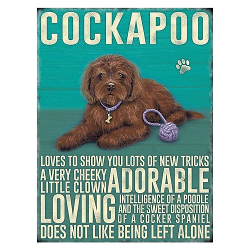 Dog Breed - Cockapoo Brown
