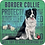 Thumbnail: Dog Breed - Border Collie