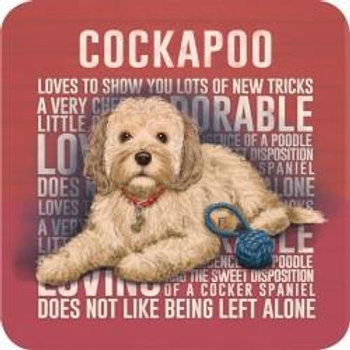 Dog Breed - Cockapoo Cream