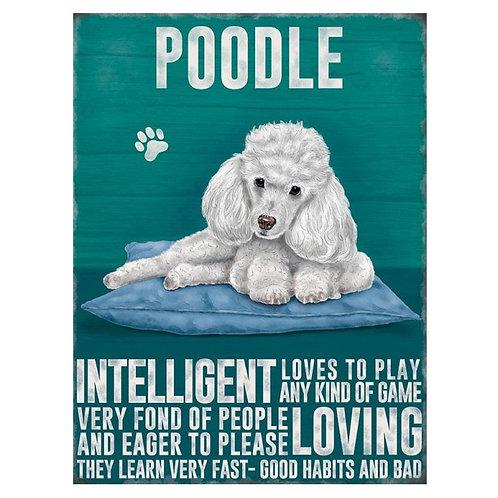 Dog Breed - White Poodle