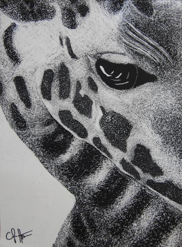 Monochrome Giraffe
