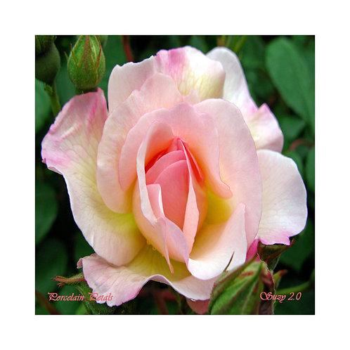 Procelain Petals Floral Tile