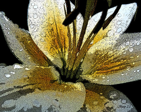Abstract yellow lily fine art print by Suzy 2.0
