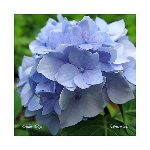 Blue Ivy Floral Tile