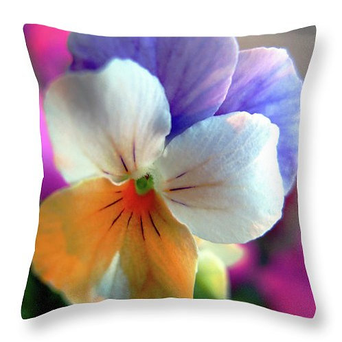 Multi-colored pansy pillow by Suzy 2.0