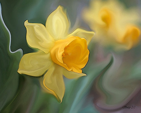 Abstract yellow Daffodil fine art print by Suzy 2.0