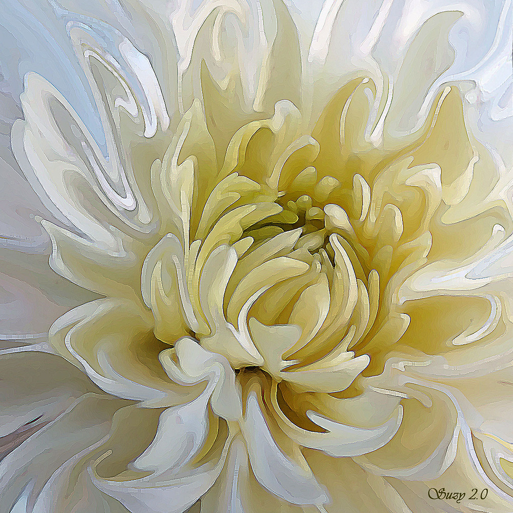 """In Mum's Arms"" by Suzy 2.0; Abstract White Chrysanthemum"