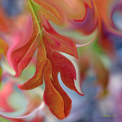 Abstract fall colored sumac leaves fine art print by Suzy 2.0