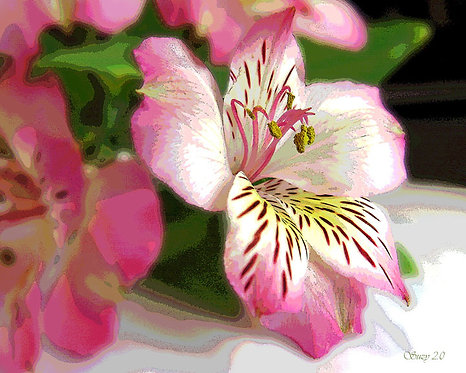 Abstract pink alstroemeria fine art print by Suzy 2.0