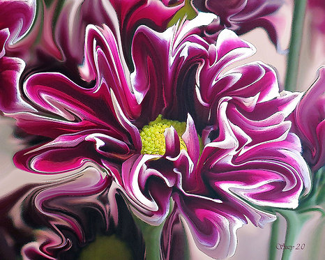 Abstract burgundy and white daisy fine art print by Suzy 2.0