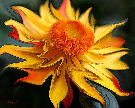 Abstract orange straw flower fine art print by Suzy 2.0