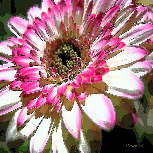 Abstract pink and white Gerbera daisy fine art print by Suzy 2.0