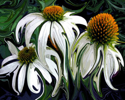 """""""Droopy Daisies"""""""