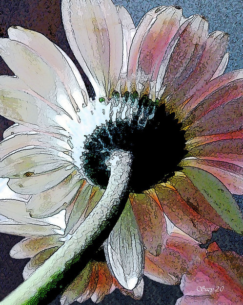 Abstract pale pink Gerbera daisy fine art print by Suzy 2.0