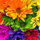 """Blooming Kaleidoscope"""
