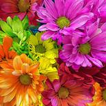 """Blooming Rainbow"""