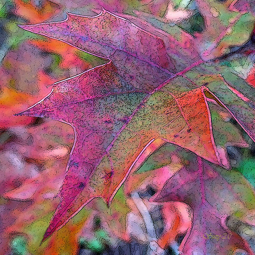 Abstract fall colored maple leaves fine art print by Suzy 2.0