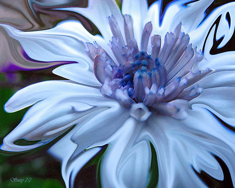 Abstract blue daisy fine art print by Suzy 2.0
