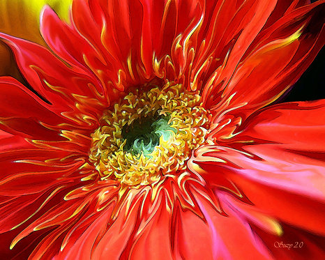Abstract red Gerbera daisy fine art print by Suzy 2.0