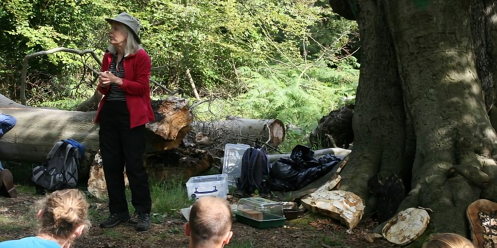 Lynne Boddy (Cardiff University) presents Fungi in the Lives of Trees Workshop Christchurch