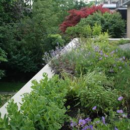 The Roxborough Green Roof