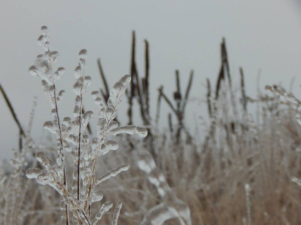 Winter Garden detail