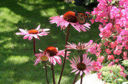 Pollinator planting in Milford