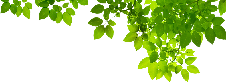 Green-Leaf-PNG-Photo.png
