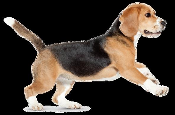 dog_PNG50331.png