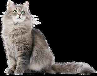 cat-png-hd-cute-hd-cat-png-1500_1172.png