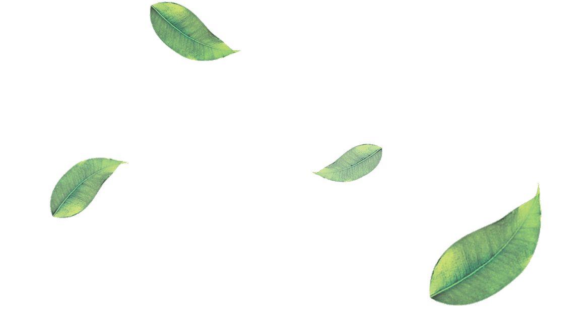 png-green-leaves-leaf-png-image-38628-16