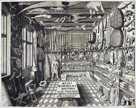 curiosity cabinet one.jpg