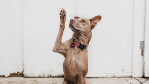 Finding the Right Training for Your Dog