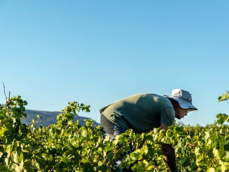 Agricultural workers have specific visas ... and specific Covid-19 related provisions