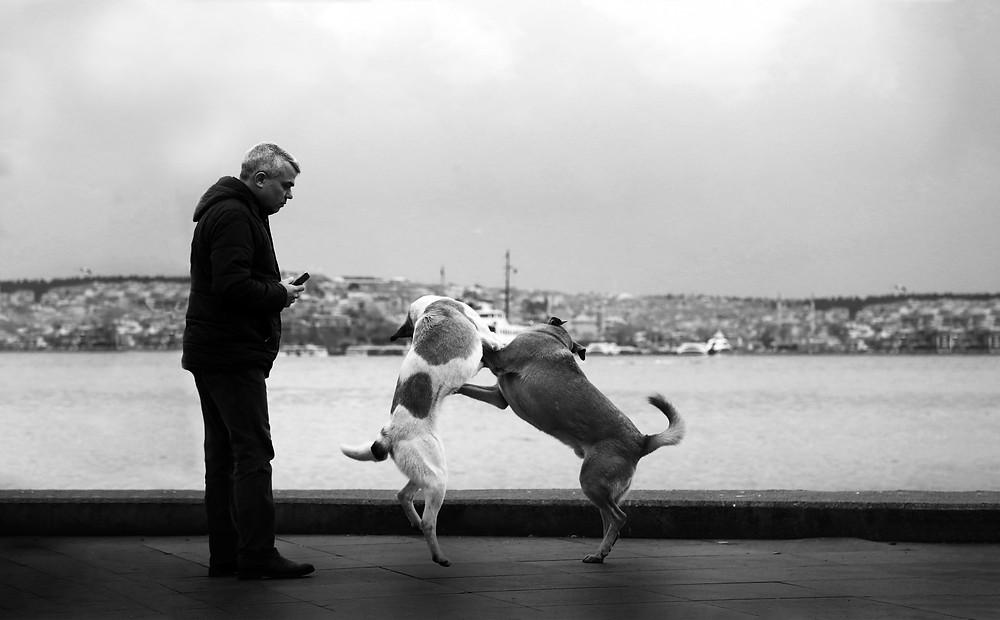 dog behavior in a dog park
