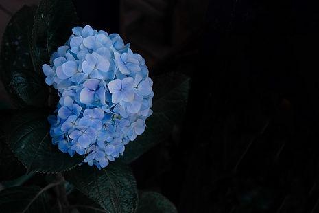 Image by Tuyen Vo