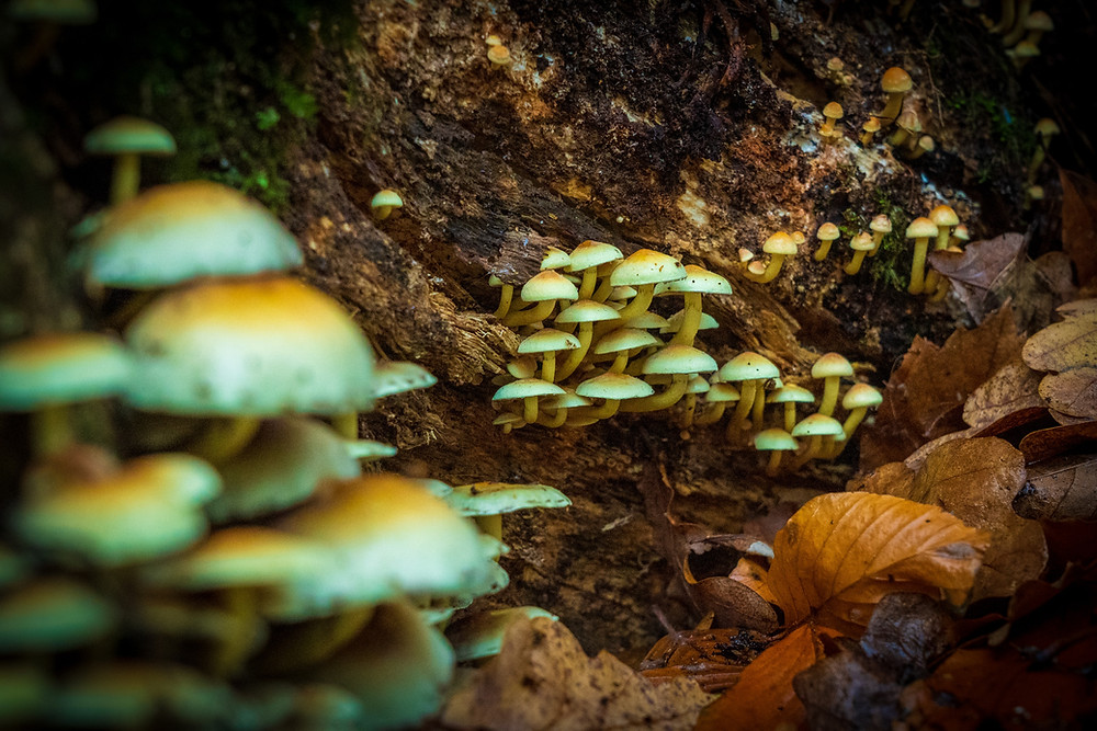 Rachel Photon : Magic Mushrooms