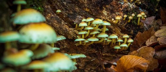 Benefits of Microdosing Medical Mushrooms