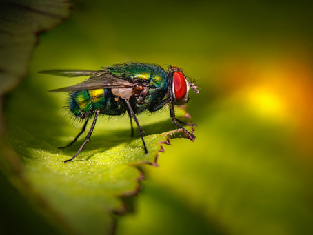 PEST and  DISEASES