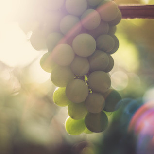 Die Weintrauben-kur: Entgiften und Revitalisieren im Herbst