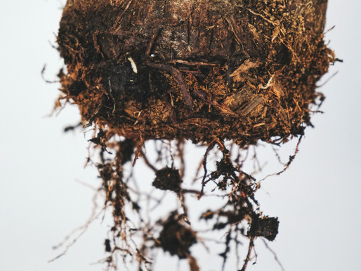 ROOT PRUNING INDOOR PLANTS; WHY, WHEN AND HOW TO DO IT