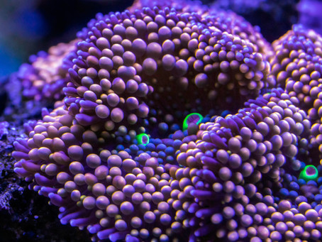 10 ways to save the coral reefs