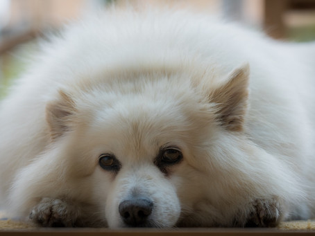 Pet Waggin's Tips for Separation Anxiety in Pets