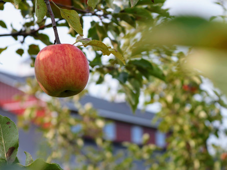 Chickens, Apples & Why The Church Has The Key They Need