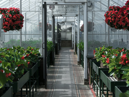 What exactly is Controlled Environment Agriculture?