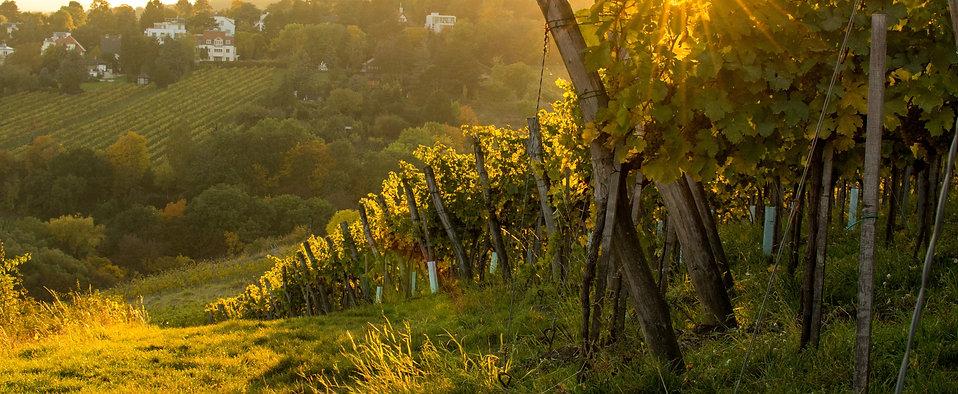 27.03.2021 II Weinpaket zum Live Tasting