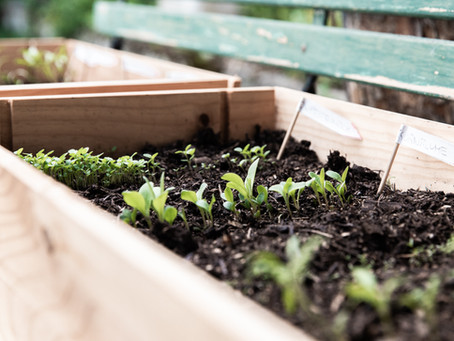 What veggies can I plant in late summer and fall?