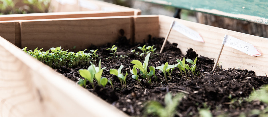 What to Plant, Flowers in the Garden, Gardener Resources