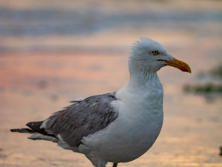 Why Should We Love Seagulls?