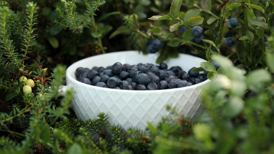 Bilberries Benefits & And How To Consume Them